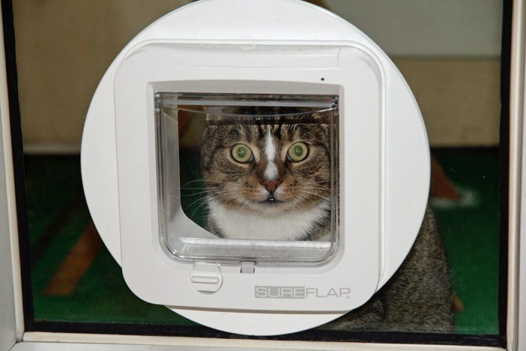 gatto guarda trasparente