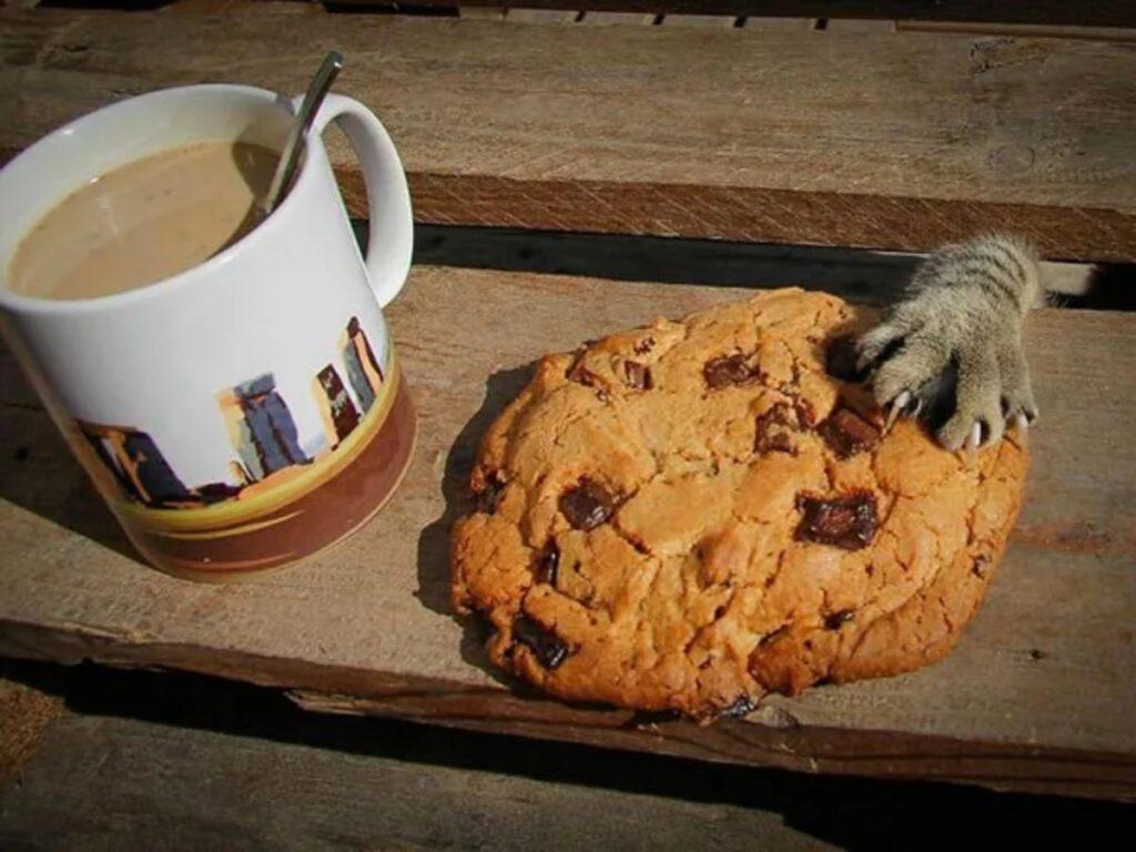 micio biscotto ruba