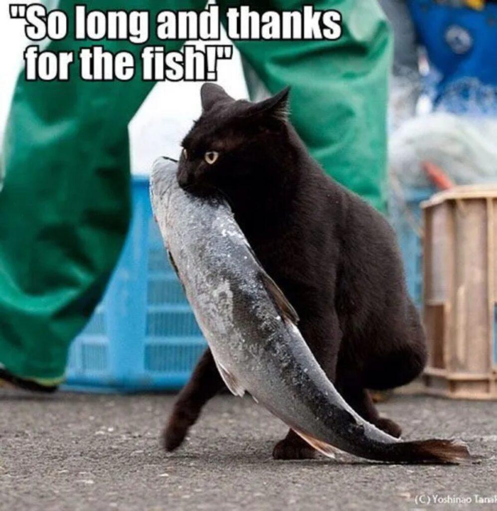 felino pesce mercato