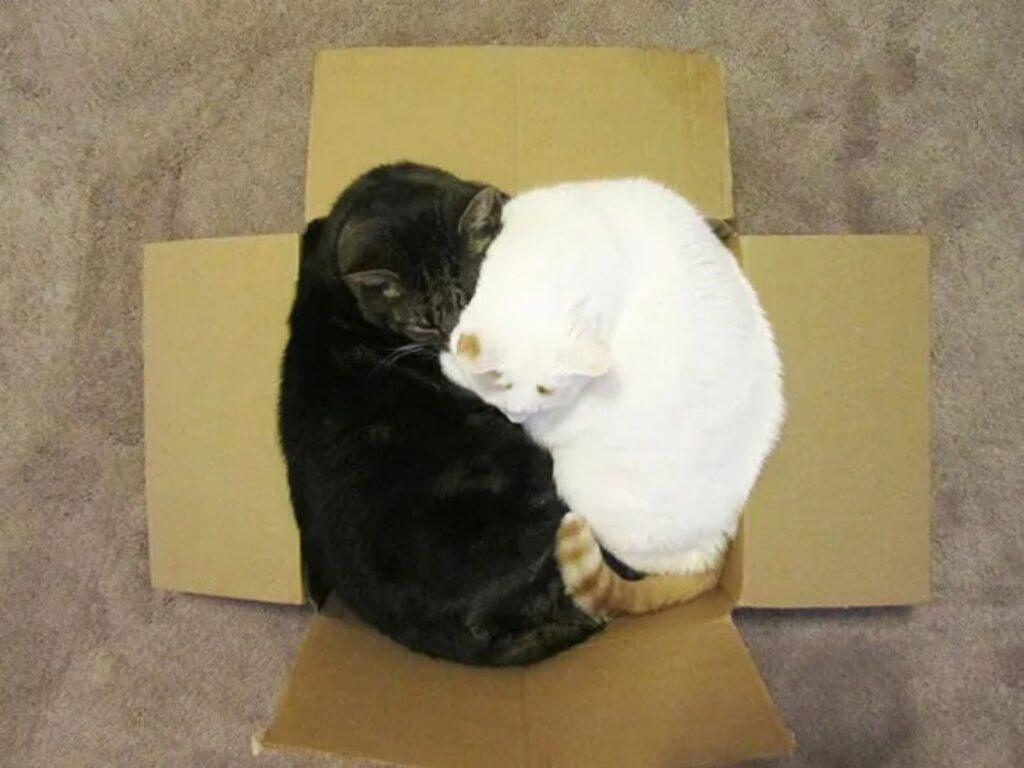 due mici scatola