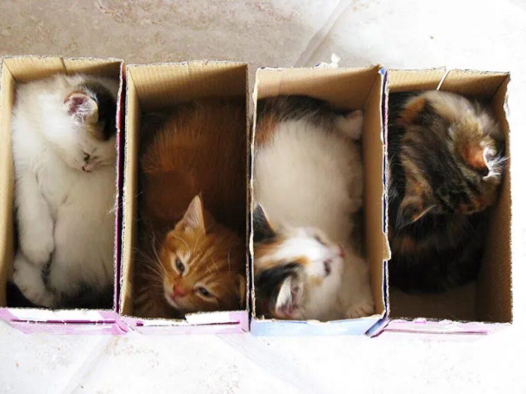 mici scatole cartoncino