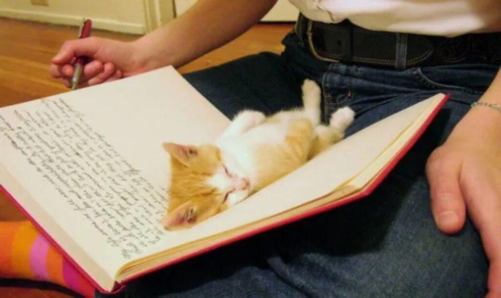 micetto libro dorme
