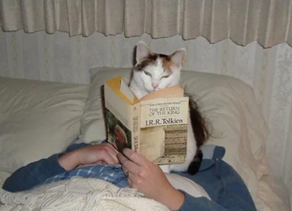 gatto legge storia