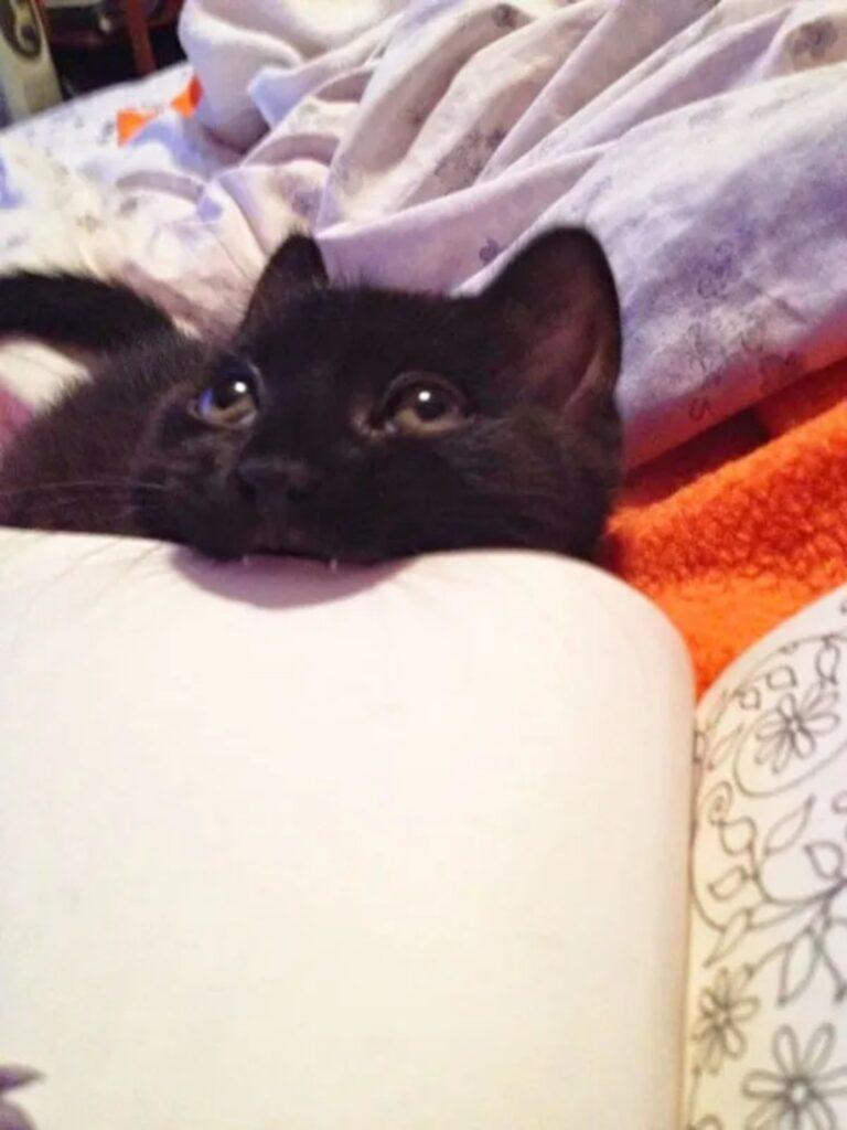 felino dispettoso nero