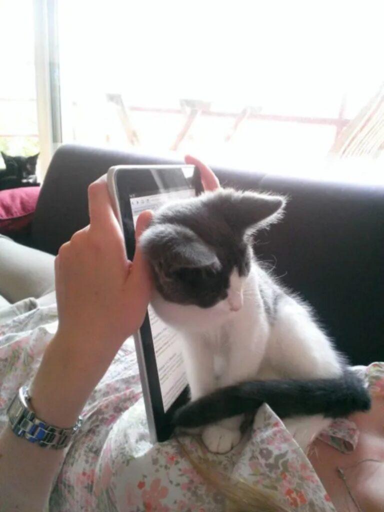 gatto vanitoso biricchino