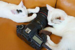 gatti fotocamera gioco