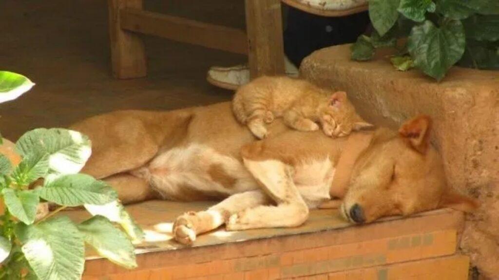 gatto arancione cane
