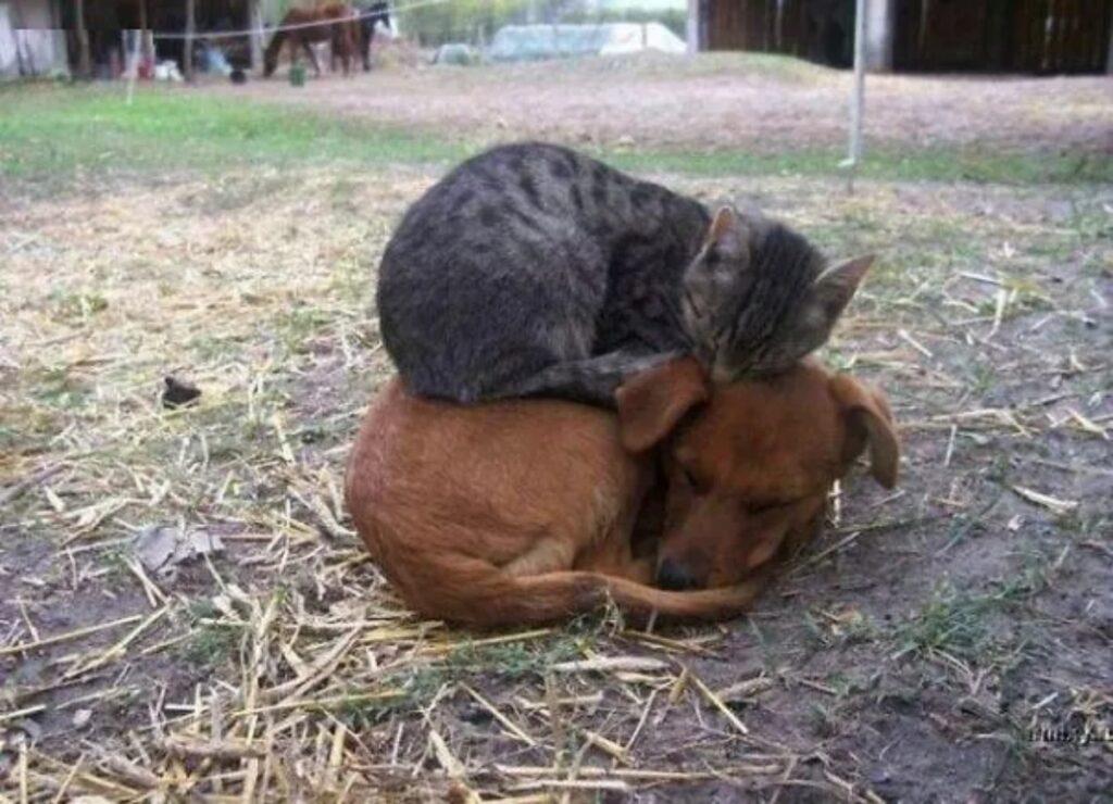 felino rannicchiato cane