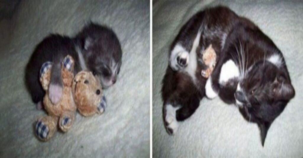 felino piccolissimo peluche