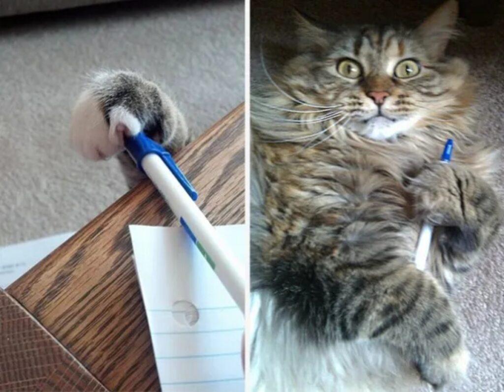 micio ruba penna