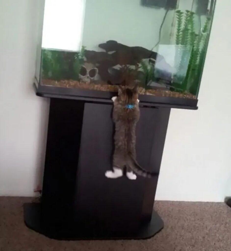 felino acquario pesci