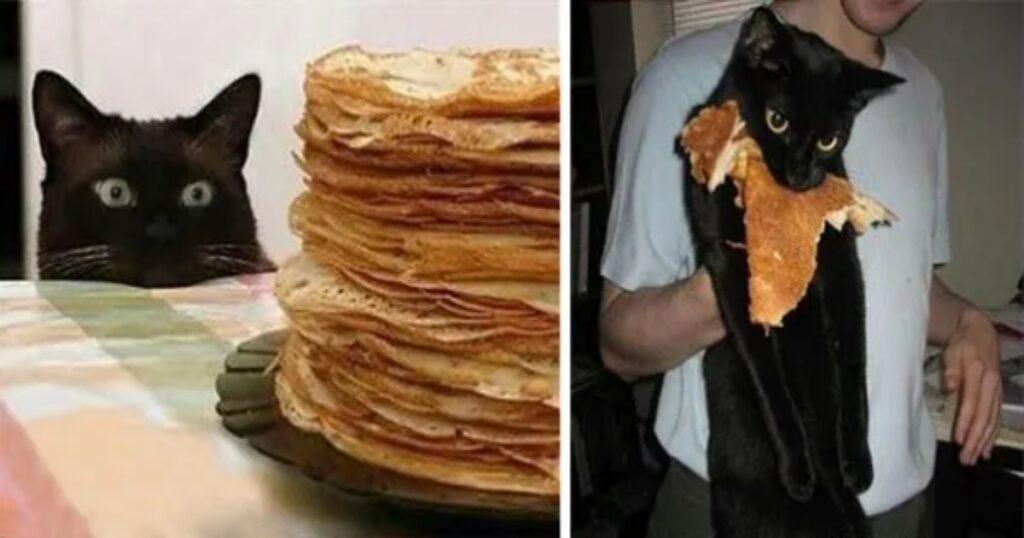 pancake micio mangia