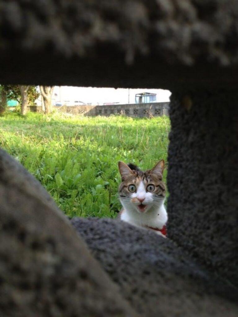 gatto sorriso tenero