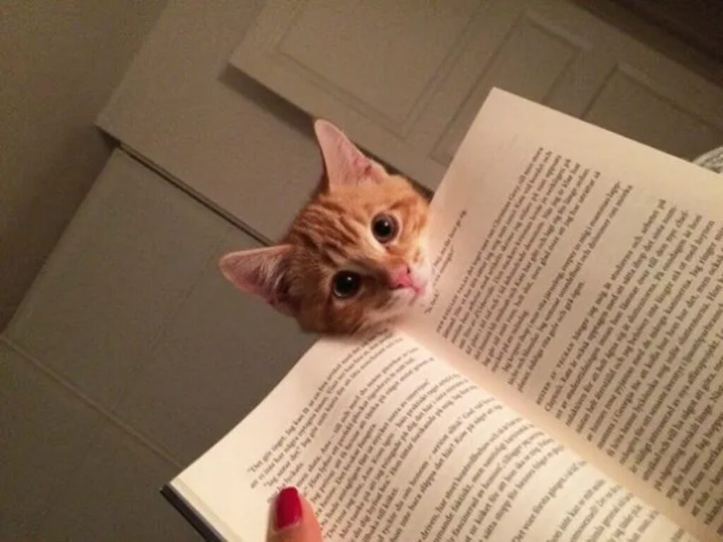 felino muso libro