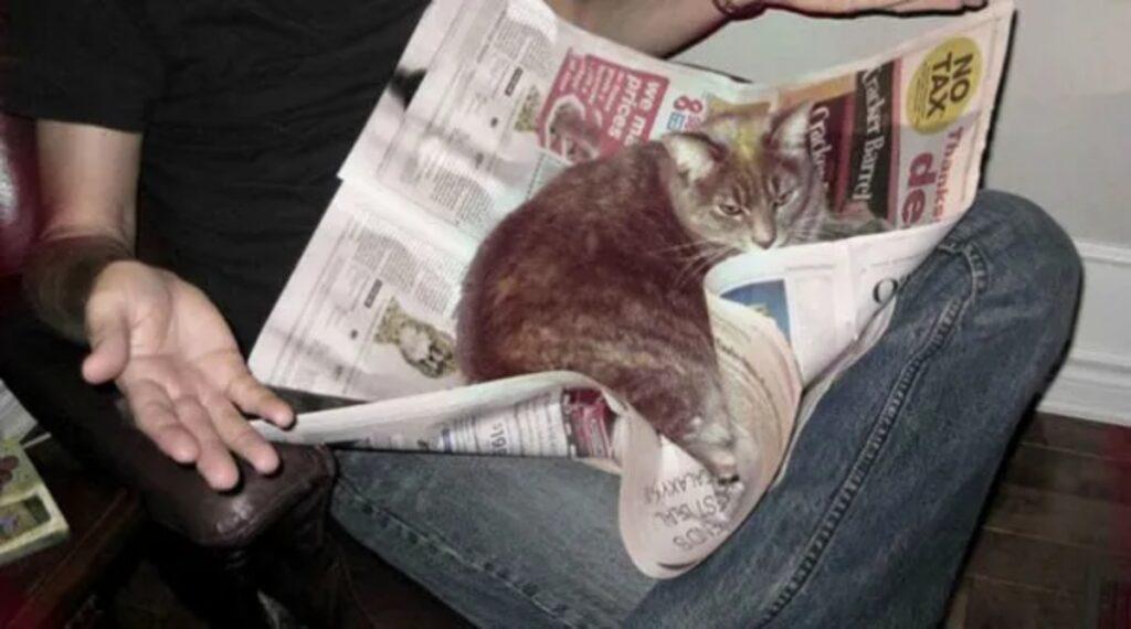 gatto giornale quotidiano