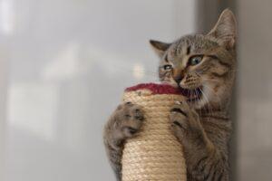 felino morde gioca