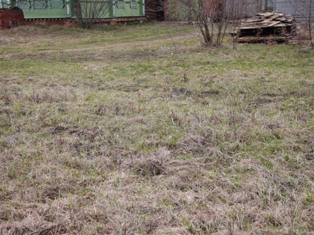 gatto erba secca