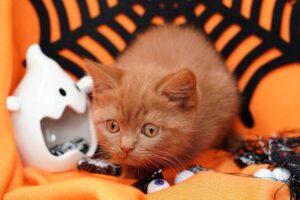 micio arancione foto