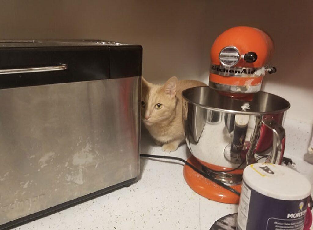 gatto angolo tavolo cucina