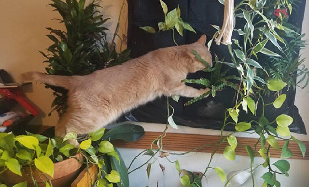 gatto arrampicato vicino piante