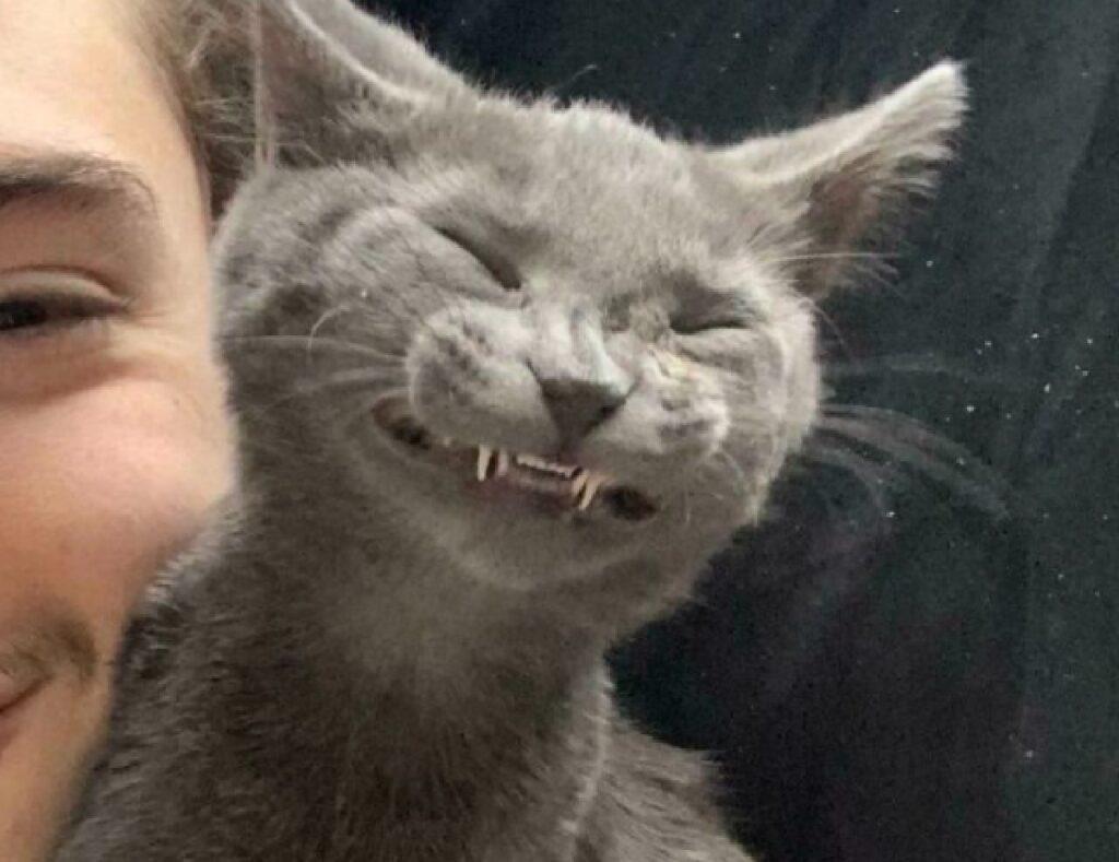 gatto sorride forzatamente