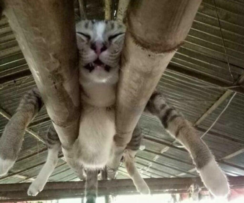 gatto dorme con pancia che penzola