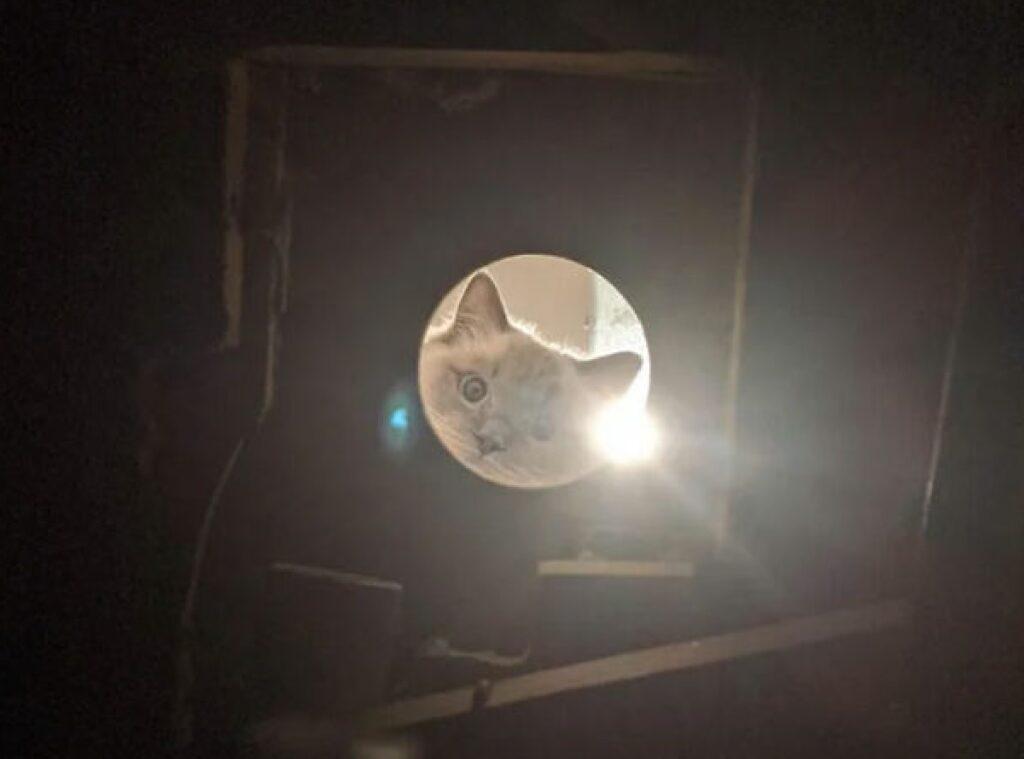 gatto con luce torcia