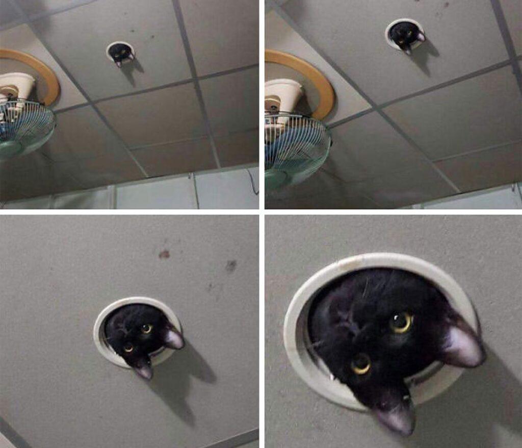 gatto nero esce da presa d'aria