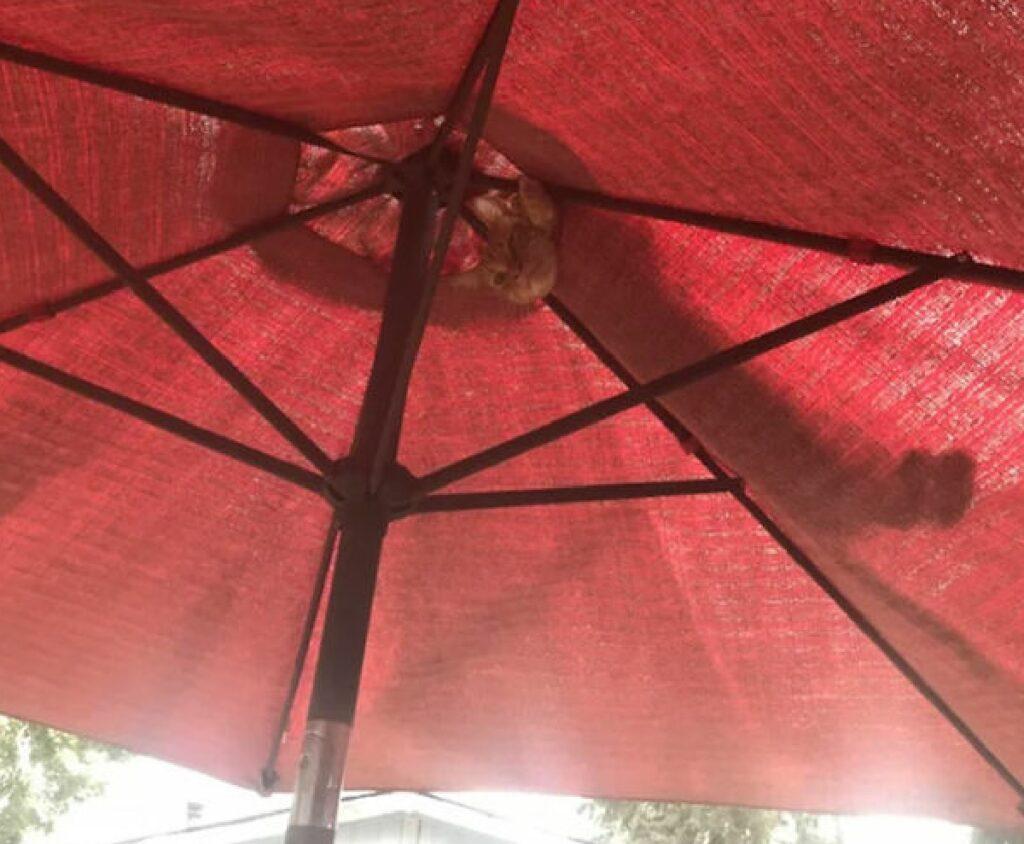 gatto si affaccia da ombrellone
