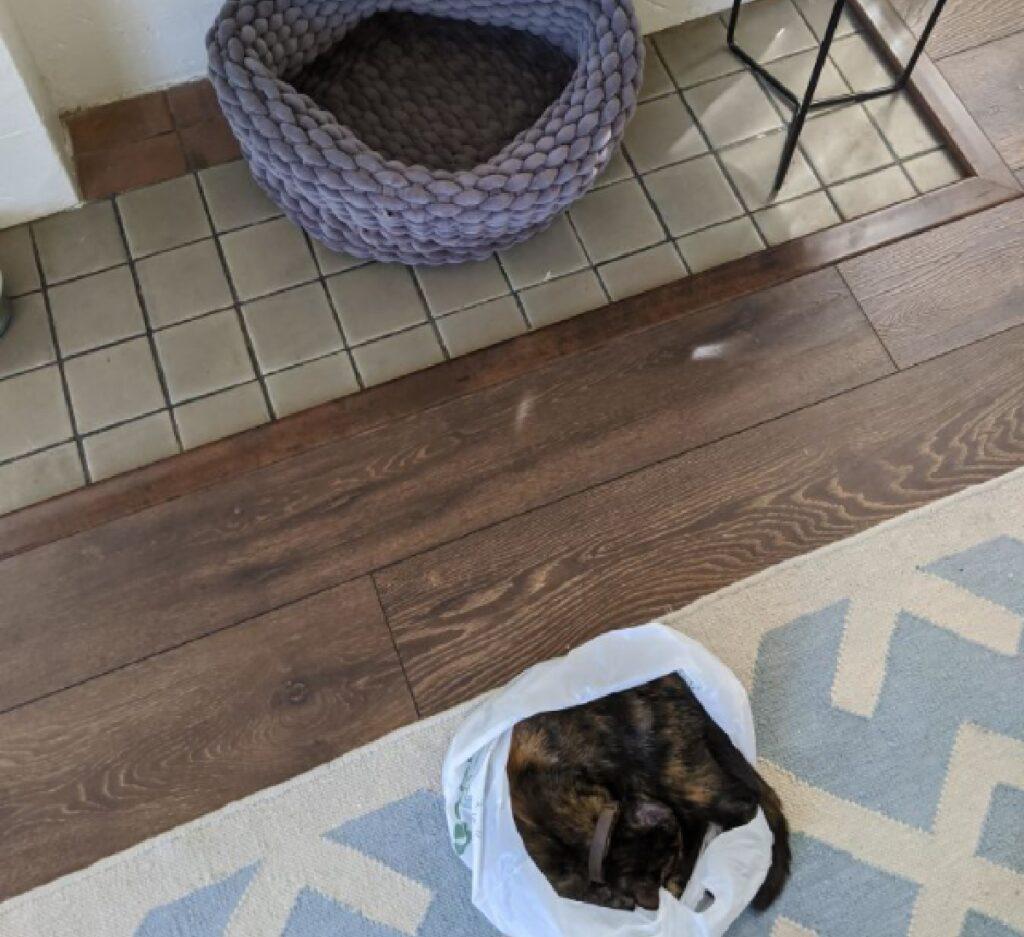 gatto preferisce busta cuccia