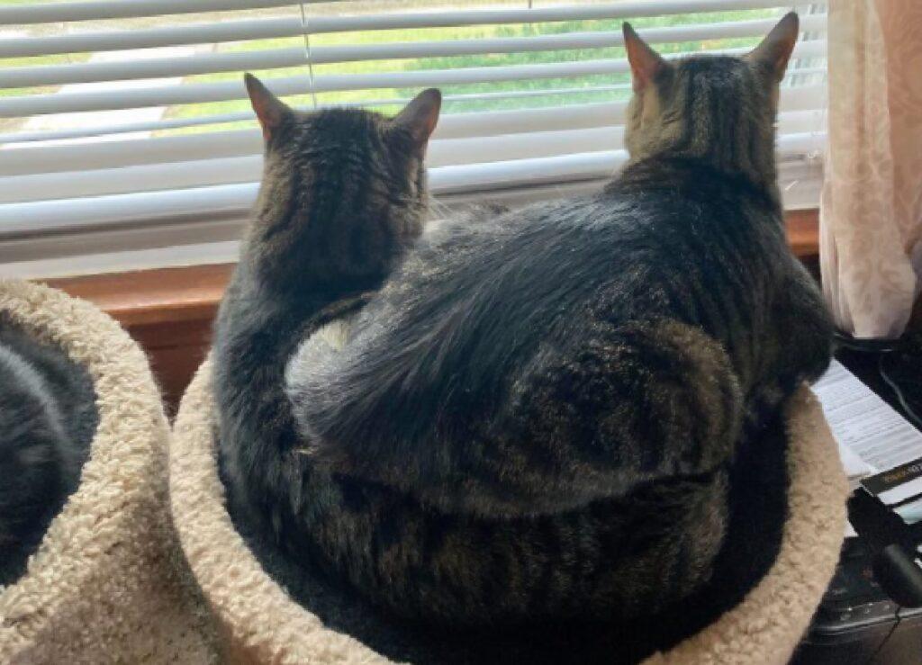 gatti dormono uno sull'altro