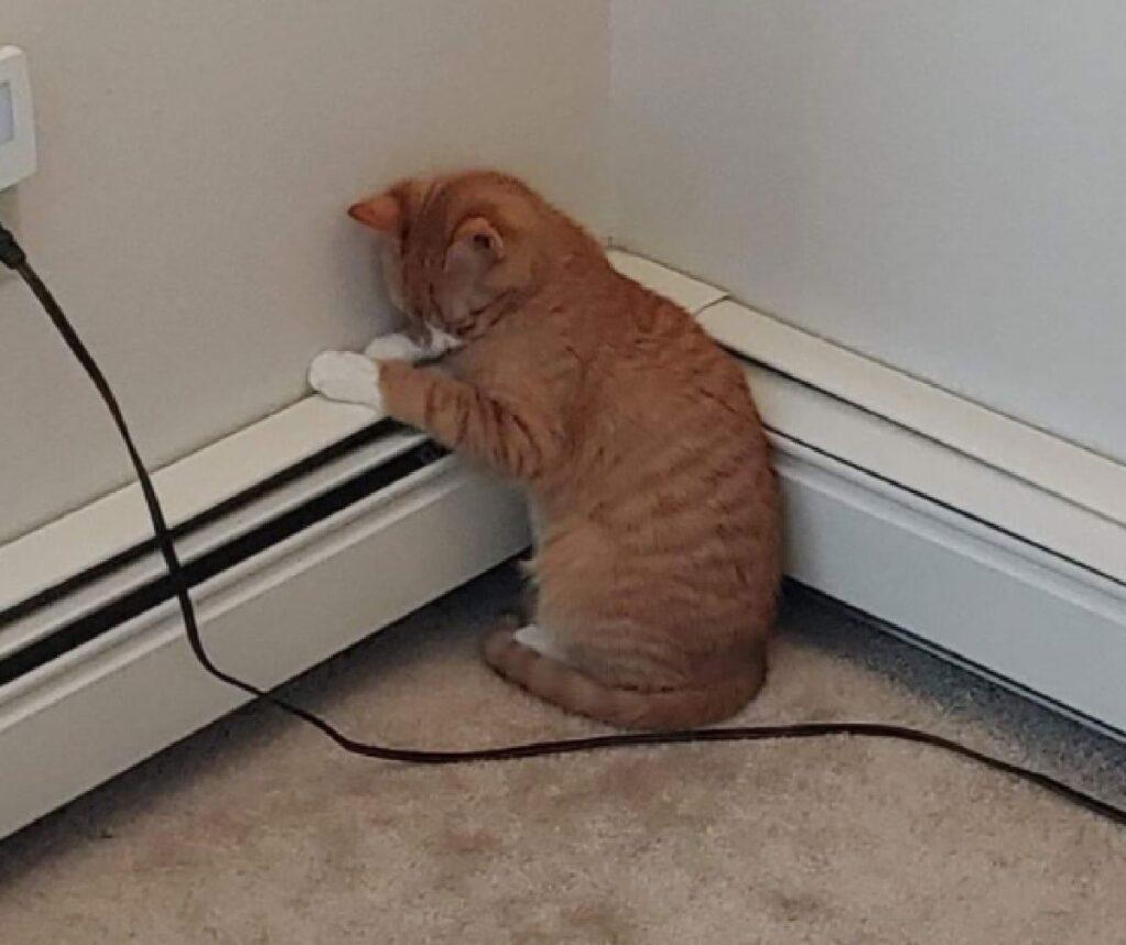 gattino rosso dorme all'angolo