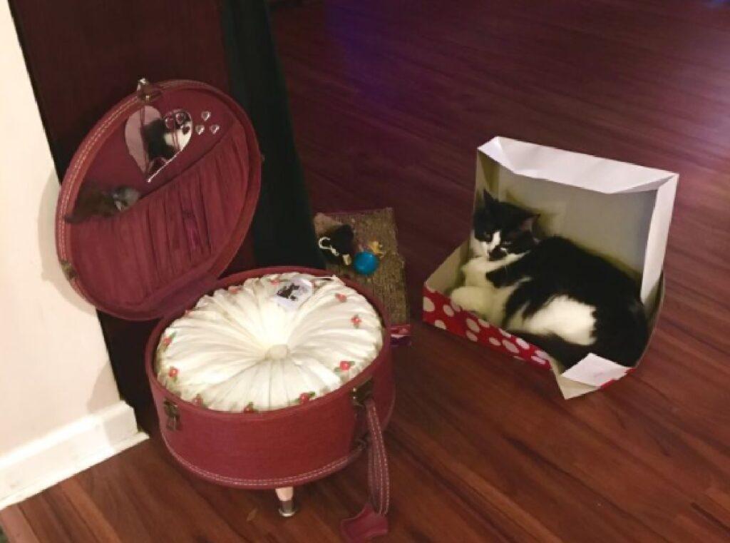 gatto preferisce scatola a valigia cuccia