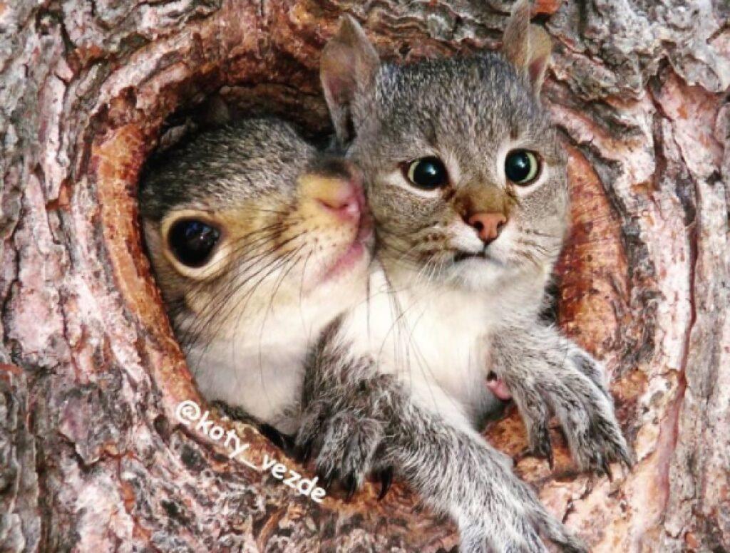 scoiattolo faccia da gatto