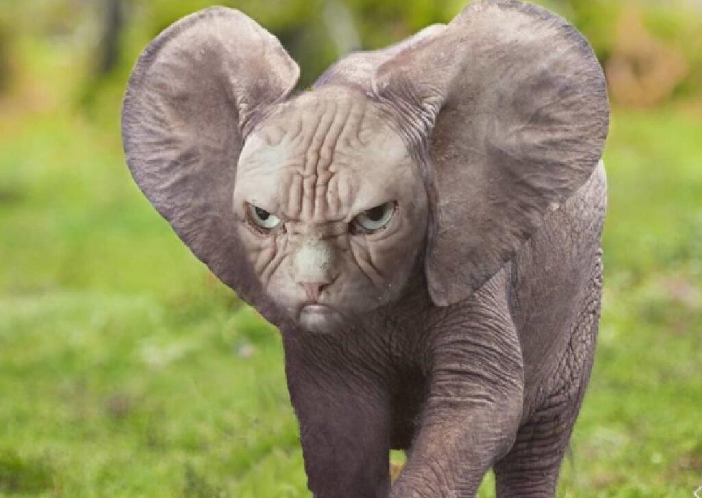 elefante faccia da gatto