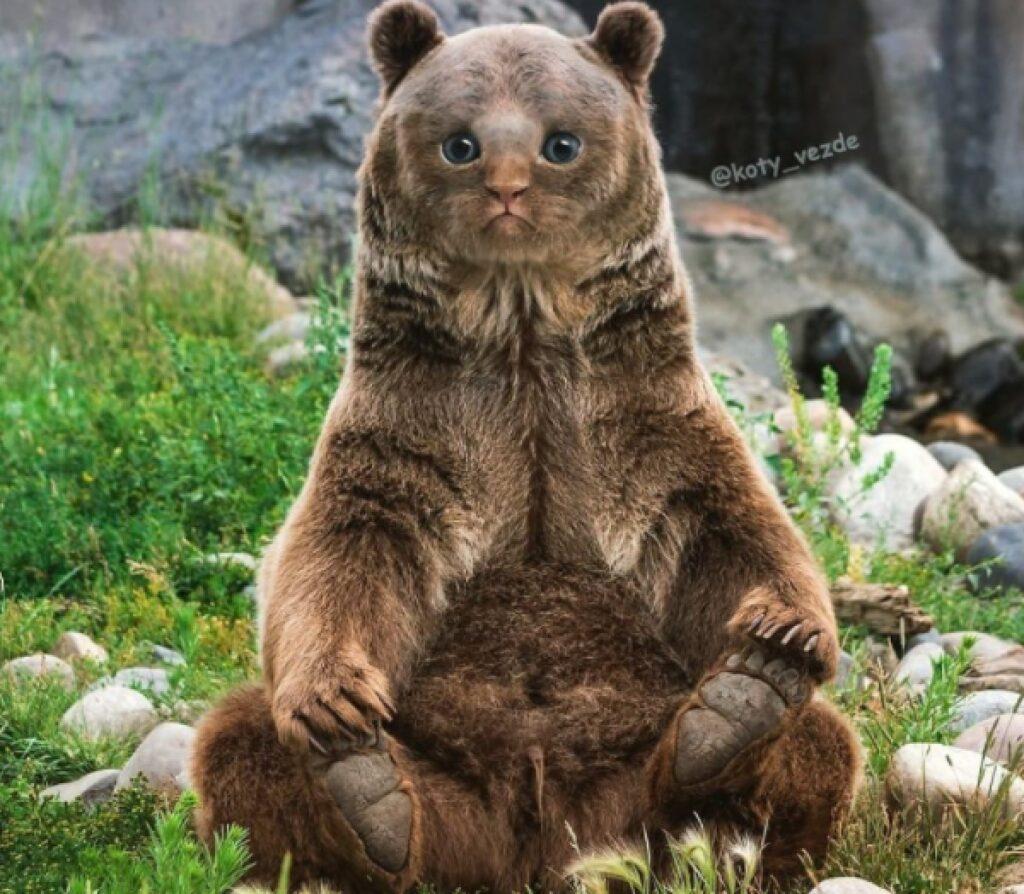 orso con faccia da gatto