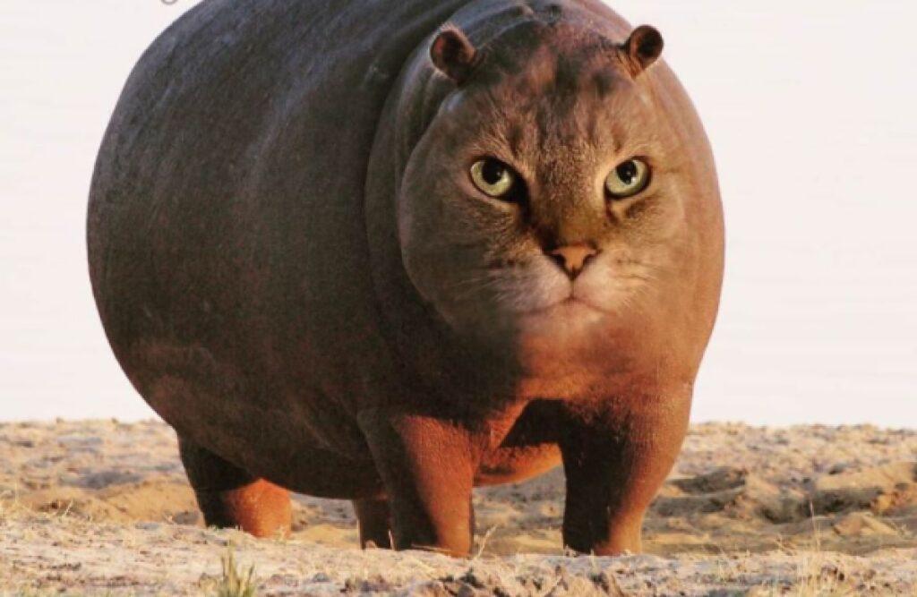 ippopotamo faccia da gatto