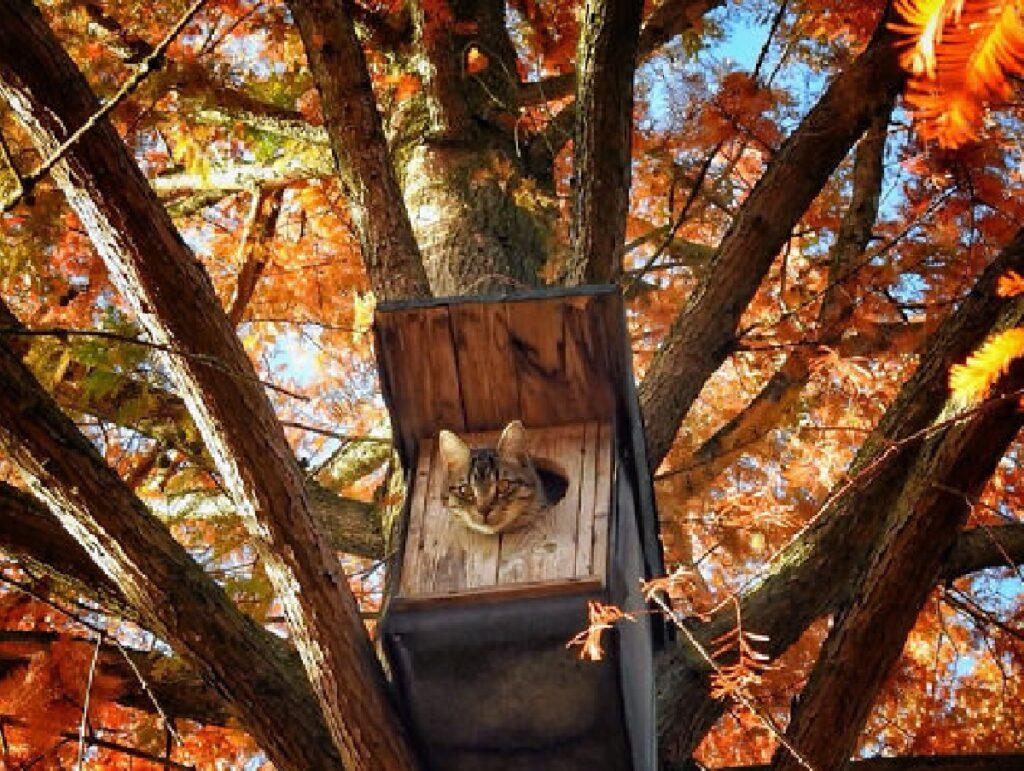 gatto su una casa sull'albero