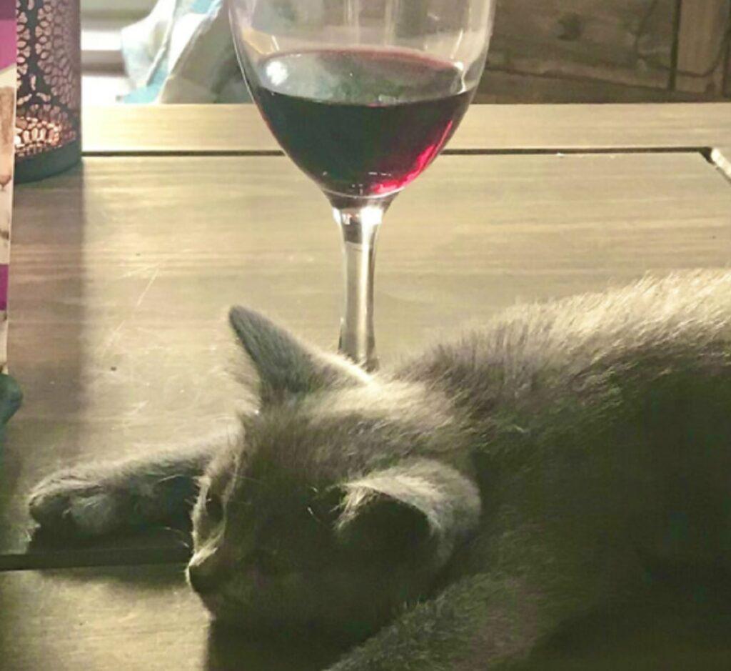 gatto con bicchiere di vino