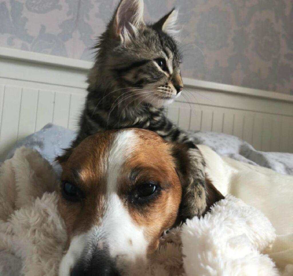 amicizia cane gatto