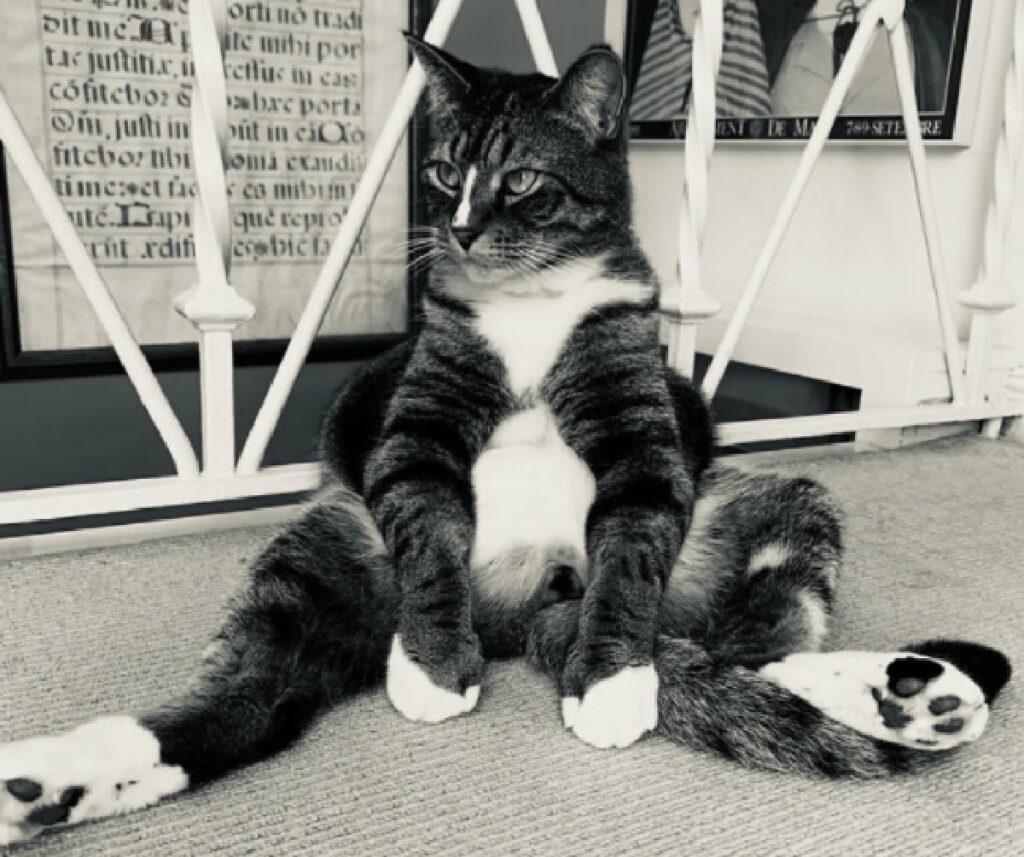 gatto seduto come umani