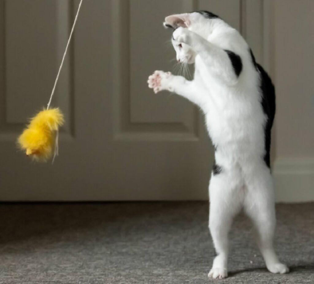 gatto pratica arti marziali