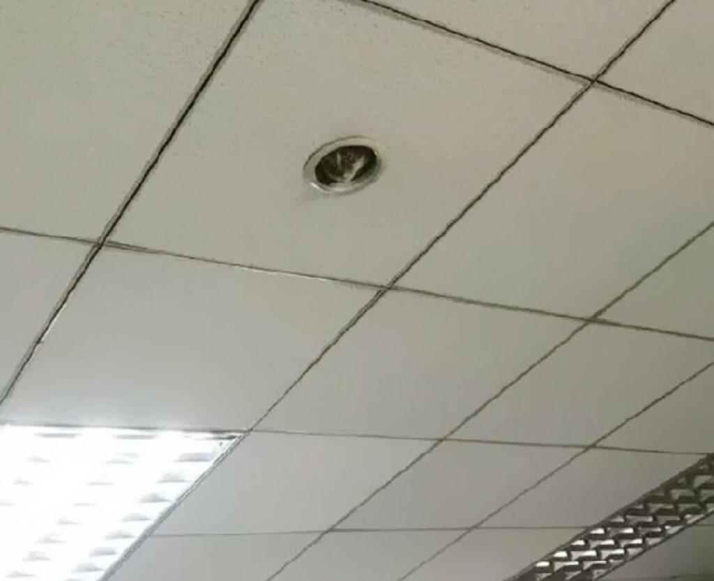 gatto buco sul soffitto