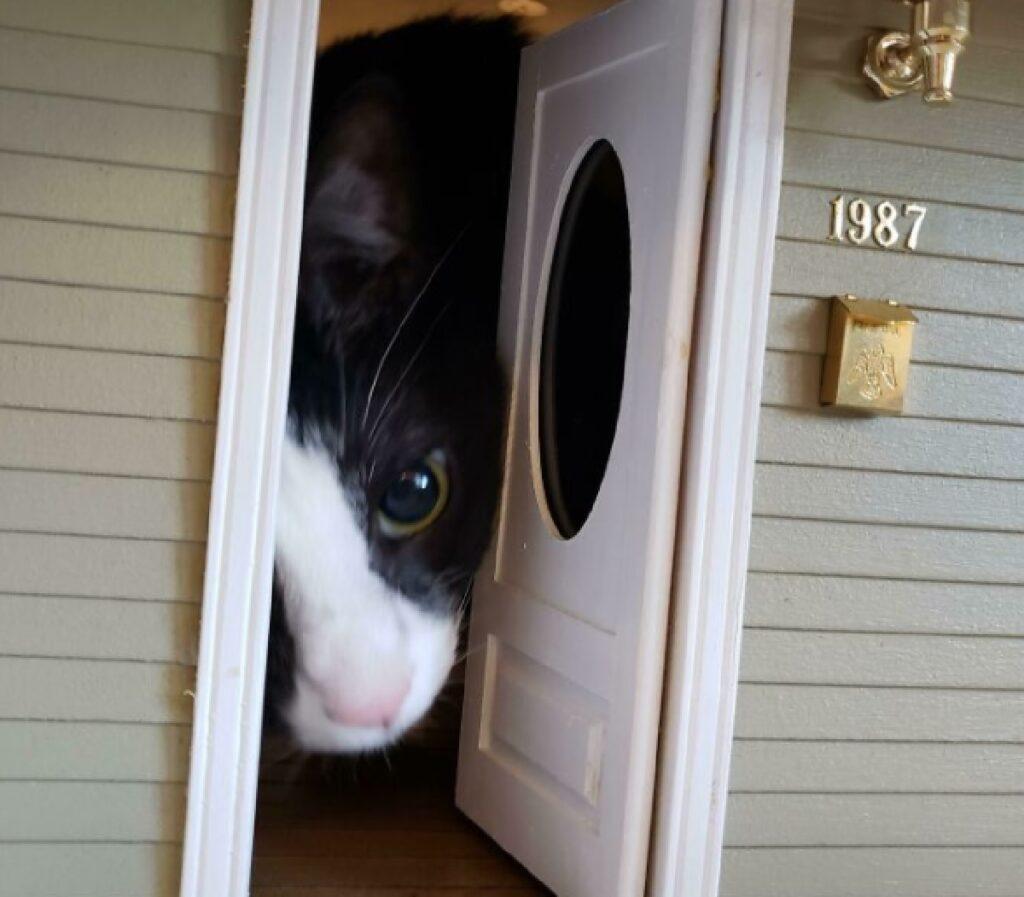 gatto bianco e nero porta piccola