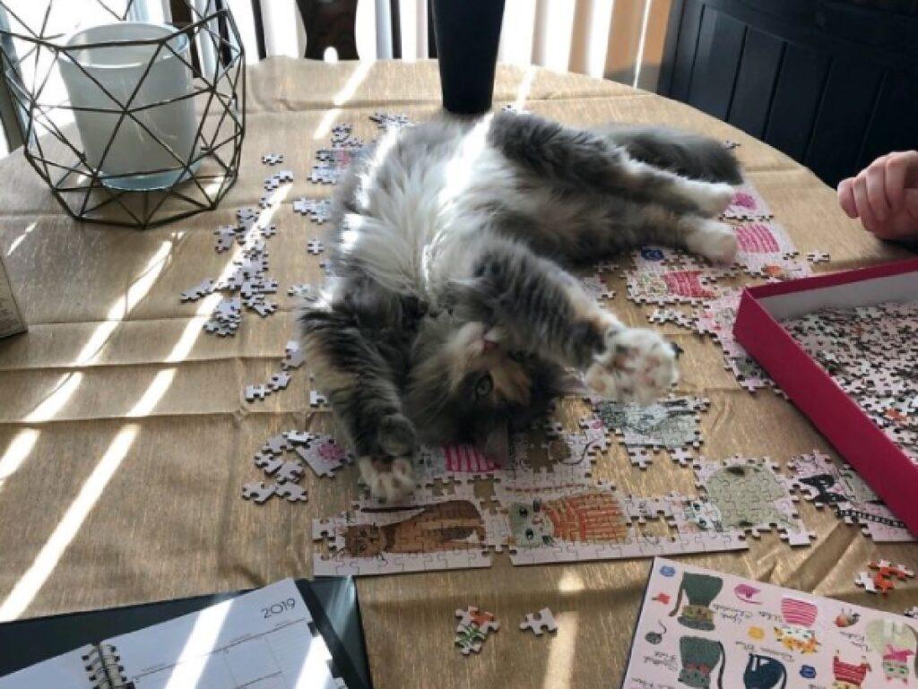 gatto sdraiato su puzzle