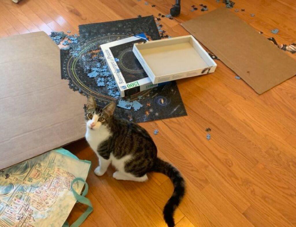 gatto butta giù cartonato