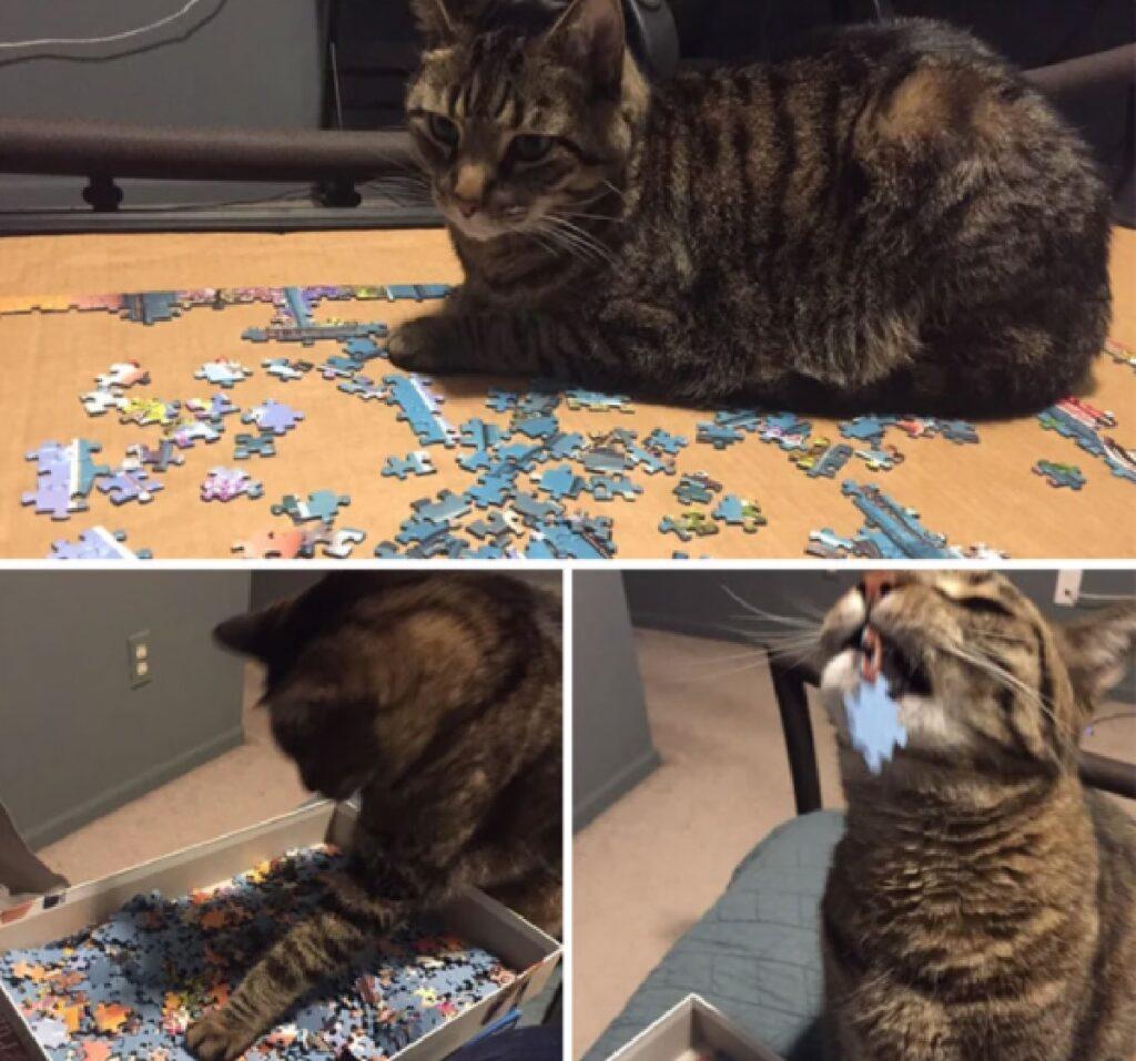 gatto mangia pezzo di puzzle