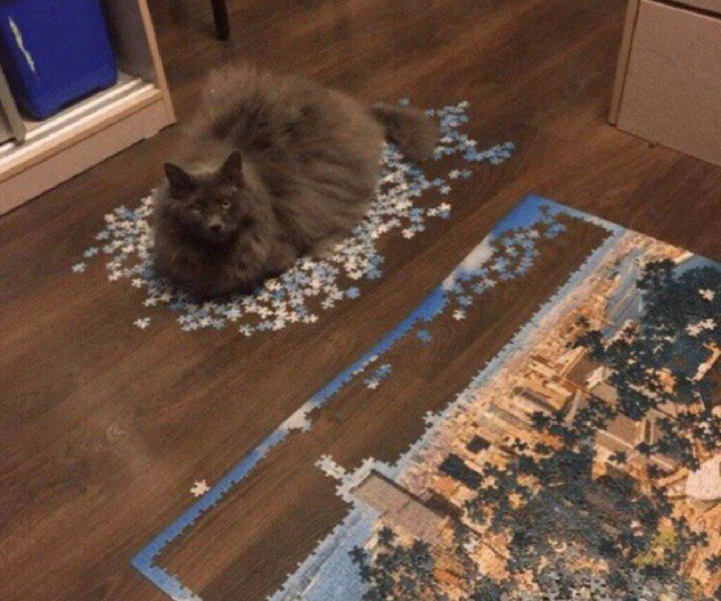 gatto pelo lungo grigio e nero