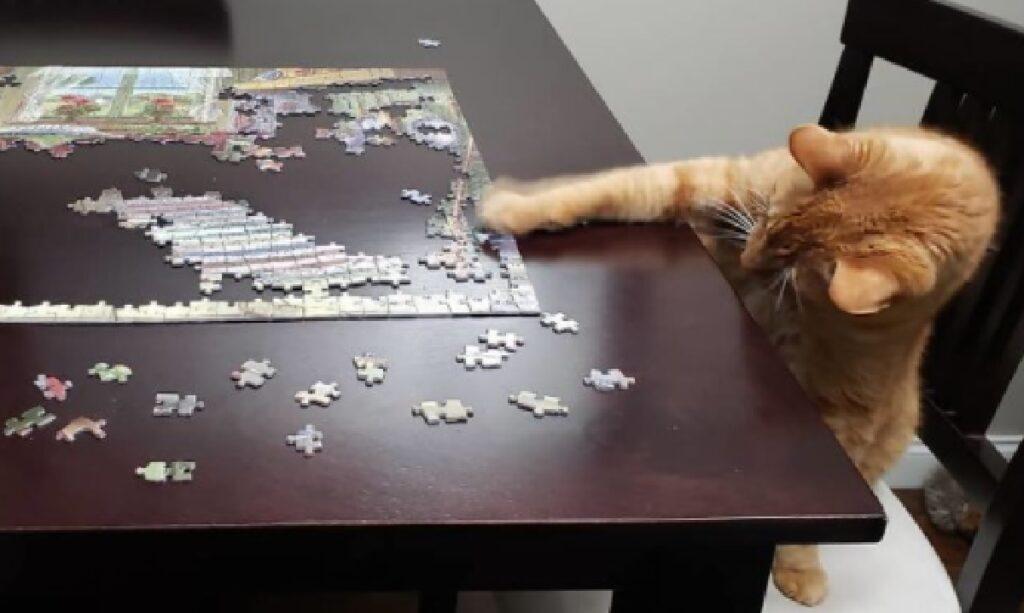 gatto rosso cerca di afferrare pezzi