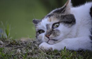 gatti che non hanno mai abbandonato lavoro da spie